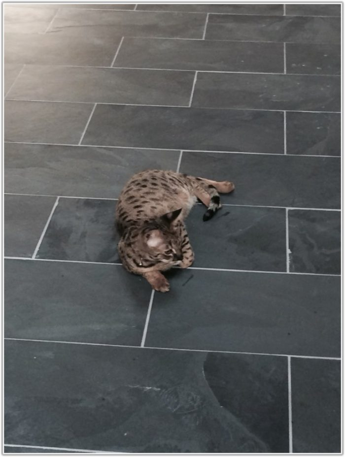 Montauk Black Slate Tile Home Depot